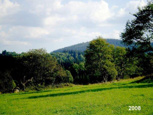 Kůrovec na Radvanovickém hřbetě – Šumava